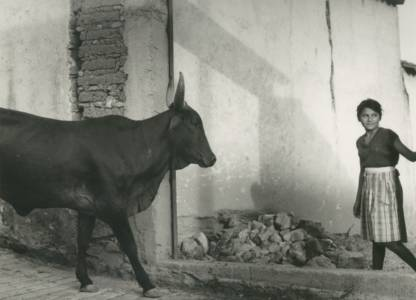 The Maiden And The Bull, 1992, Gelatin Silver Print, 11 X 14
