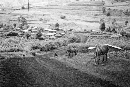 Village On A Mountain