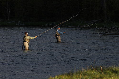 fly fishing yellowstone photo
