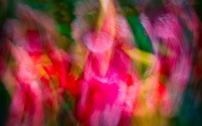 THOMAS LA BARBERA / PHOTOGRAPHER SPOTLIGHT