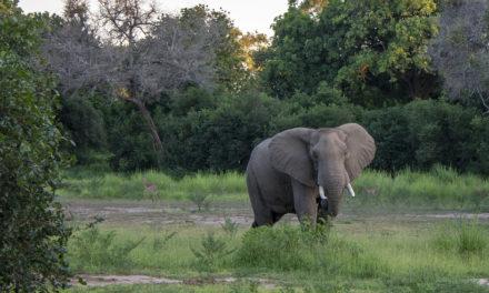 A New Zimbabwe